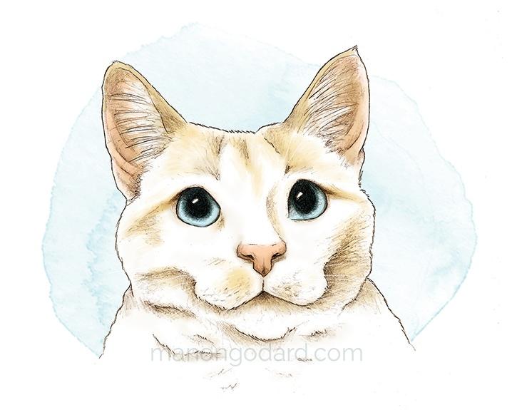 Portrait d'un chat blanc – Dessin au crayon (+ vidéo making-of)