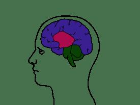 Cerveau_reptilien_