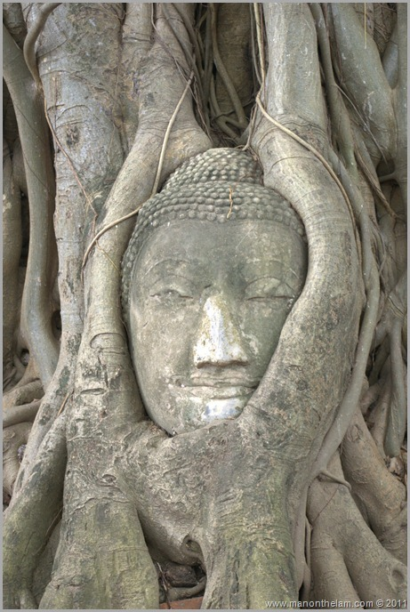 Ayuthaya Wat Phra Mahathat Buddha Head
