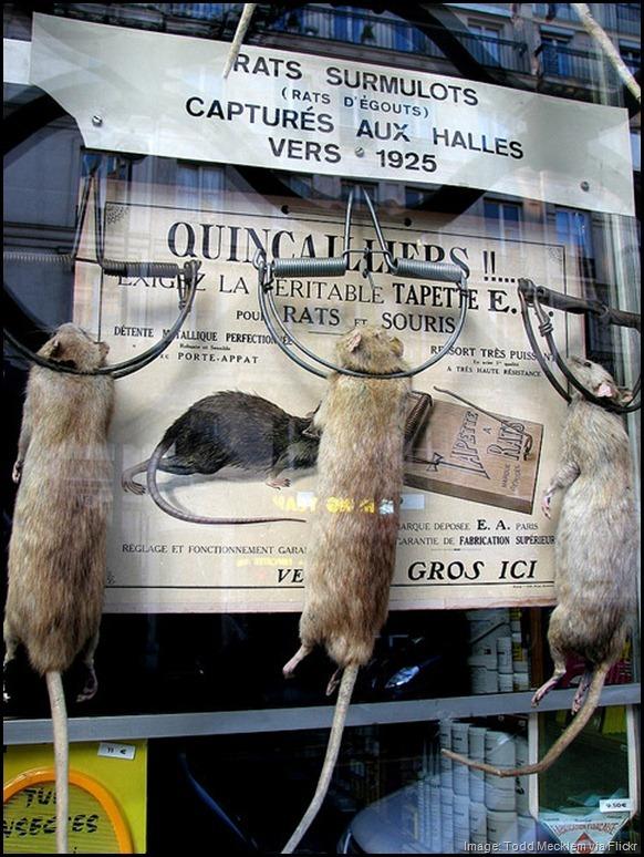 Dead rats in rat traps -- Julien Aurouze, Paris, France