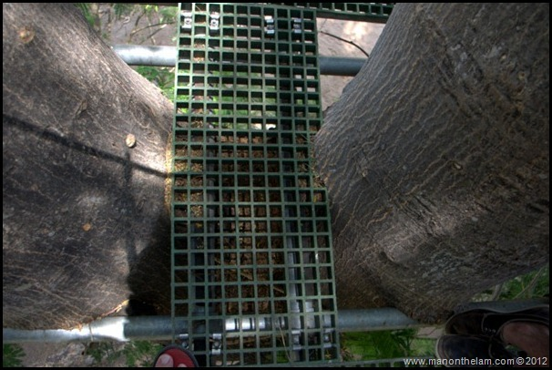 Tree stump overgrowing landing area -- Huana Coa Canopy Adventure Zip Line Tour, Mazatlan, Mexico, #GoMazatlanNow