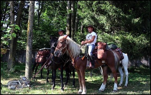 Horses in Neamt County, Romania #priNeamt