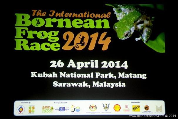 International Bornean Frog Race, Kubah National Park, Sarawak, Borneo, Malaysia