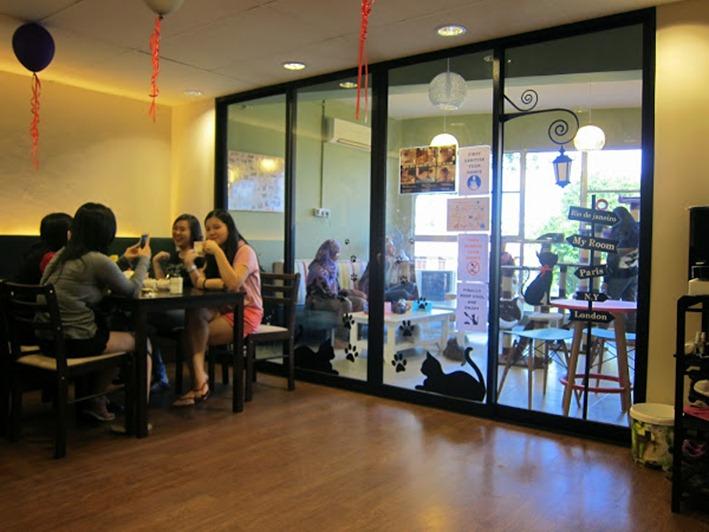 Meow Meow Cat Cafe, Kuching, Sarawak, Borneo, Malaysia