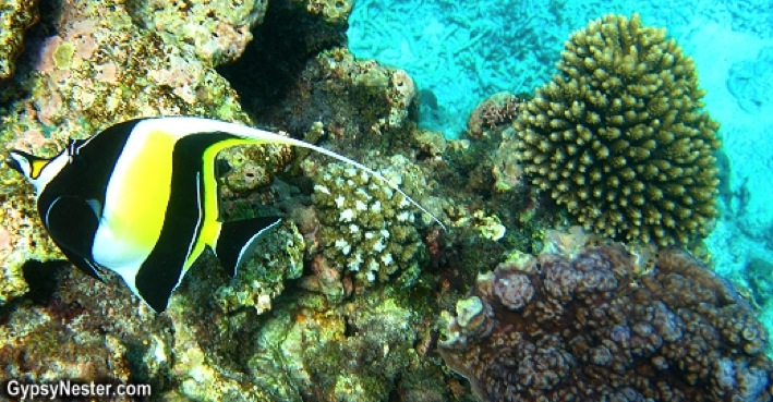 Snorkeling the Great Barrier Reef Bucket List Check Gypsy Nester Top 100 Travel Blog Posts of 2014 by Social Shares