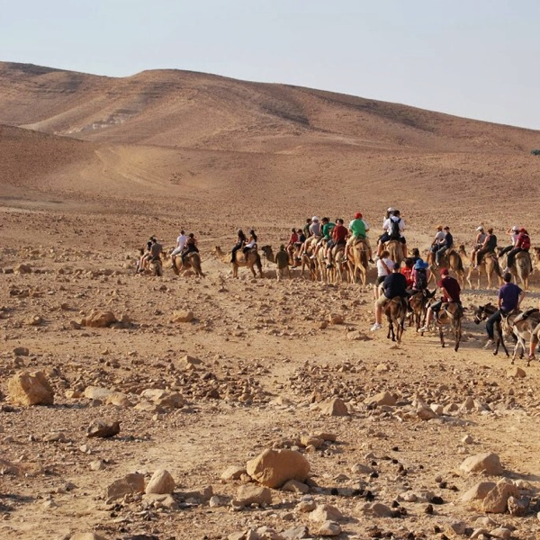 Man On The Lam Top 100 Travel Blog Posts of 2015 so far by social media shares  Camels in desert Israel