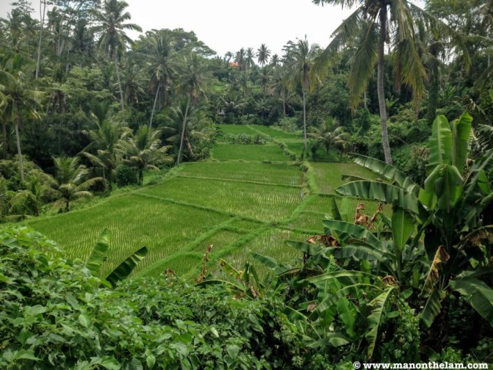rice-paddy-in-ubud-bali-indonesia