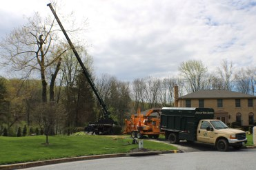 Wide angle tree removal in Baltimore County