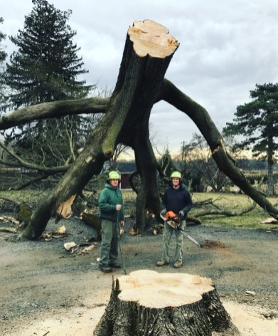 Manor Tree Service - stump and tree following cut