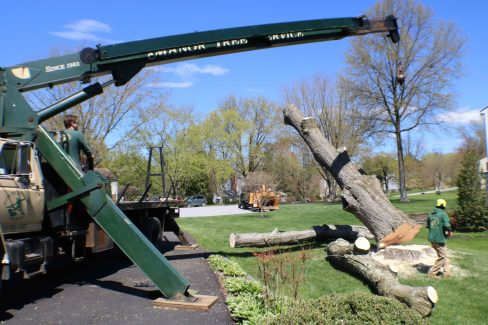 tree falling during removal
