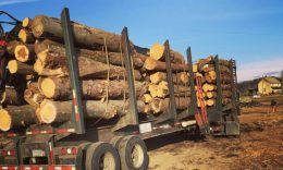 Truck load of logs following tree clearing
