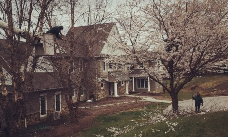 Tree pruning and trimming near house