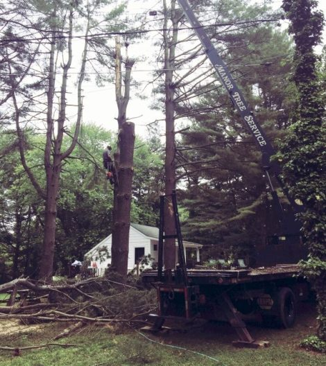 Manor Tree Service - tree trimming