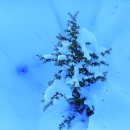 Manor Tree Service | Snow Caring for Young Trees in Winter | Tree Damage | Glen Arm, Harford County, Baltimore County, MD