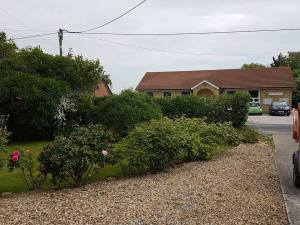Face and top privet hedge( South Woodham Ferrers Main Road) removal of crab apple 3