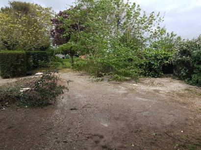 Taking down x6 leylandii tree tillingham marshes 11