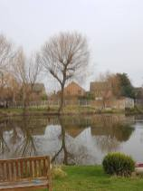 Pollarding a willow over a massive pond 1
