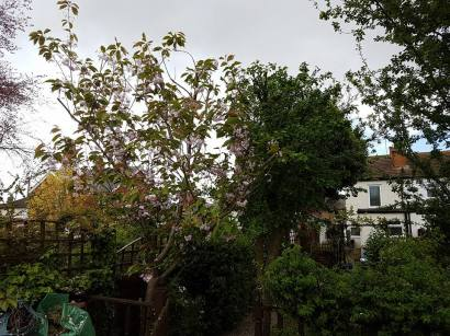Reducing a mixed species of tree( Lillian Road Burnham)4