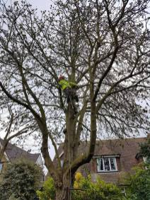 Reducing & thinning a horse chestnut3