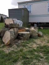 Take down poplar tree Steeple Bay caravan park15