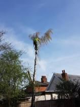 Tillingham High Street(in conservation area all correct procedures have been taken)3