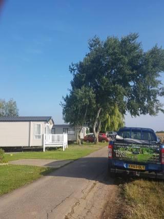 Pollarding x 1 Poplar & one weeping Willow Steeple Bay Caravan Park 1