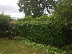 Reducing Poplar Tree 13