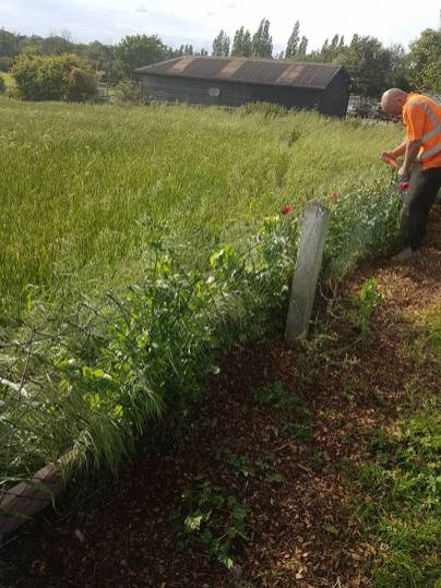 Removal of wire boundary fence & posts (dengie) before 3