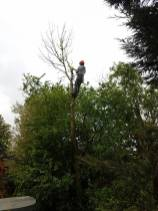 Taking down x1 ash tree with ash dieback lower Burnham Road over a hot tub 4
