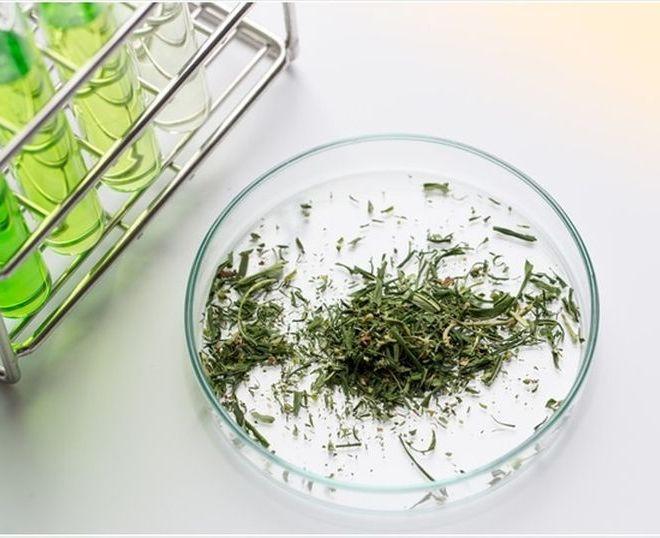 Cannabinoid Analysis Techniques