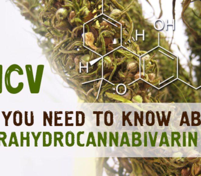 Cannabinoid: tetrahydrocannabivarin (THCV)