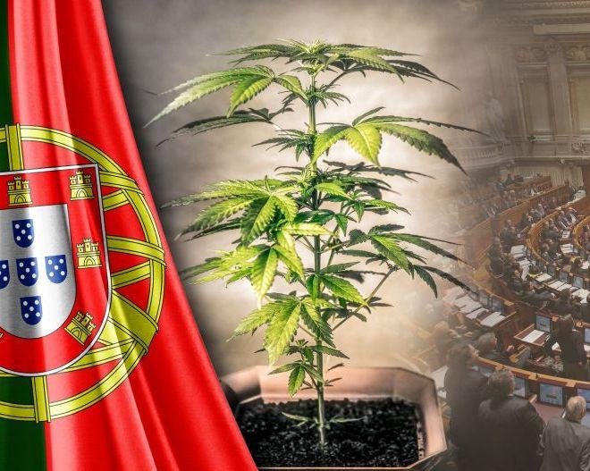 Portugal Cannabis:  Aprovada hoje pelo INFARMED mais uma Empresa para cultivo de Cannabis