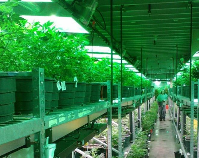 Cannabis and Hemp Waste Disposal Requirements for Growers and Manufacturers