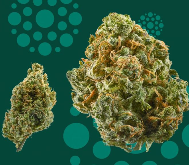The 5 most flavorful CBD strains
