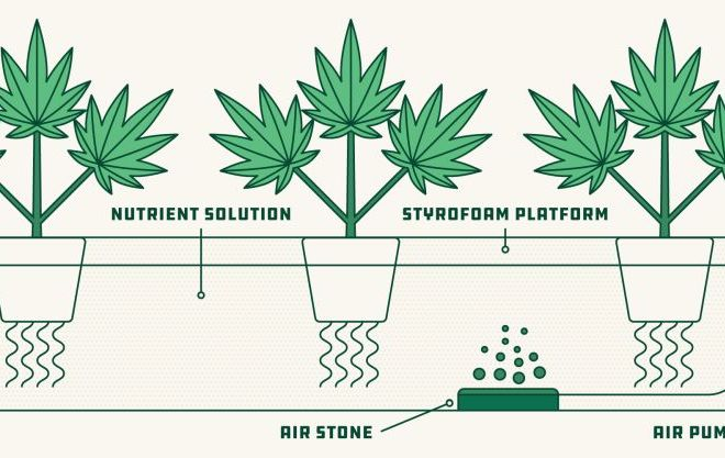 Hydroponics Cannabis Growing Guide