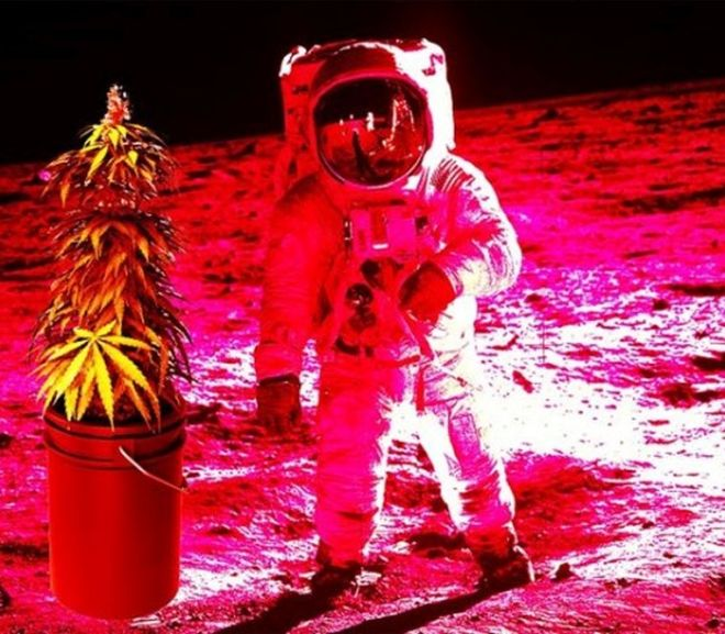 Will There Be Cannabis on Mars?