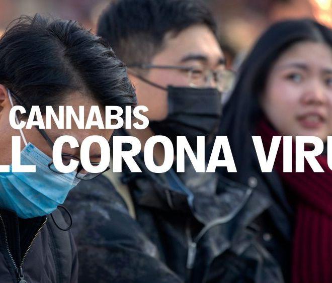 CAN CANNABIS REALLY KILL THE CORONAVIRUS?