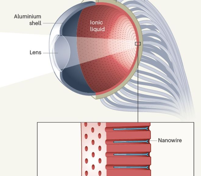Artificial eye boosted by hemispherical retina