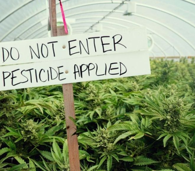 Six Products added to List of Approved Pesticides for Cannabis