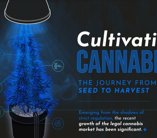 Cultivating Cannabis: The Journey from Seed to Harvest