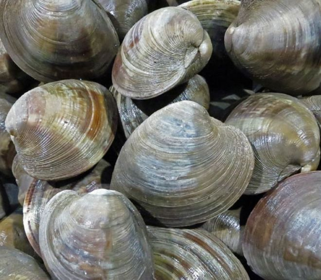 FDA Finalizes Framework That Will Resume Shellfish Trade with Europe for the First Time in 10 Years