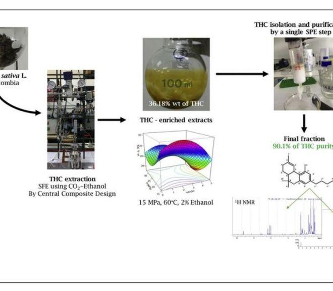 Extraction, isolation and purification of tetrahydrocannabinol (THC) from the Cannabis sativa L