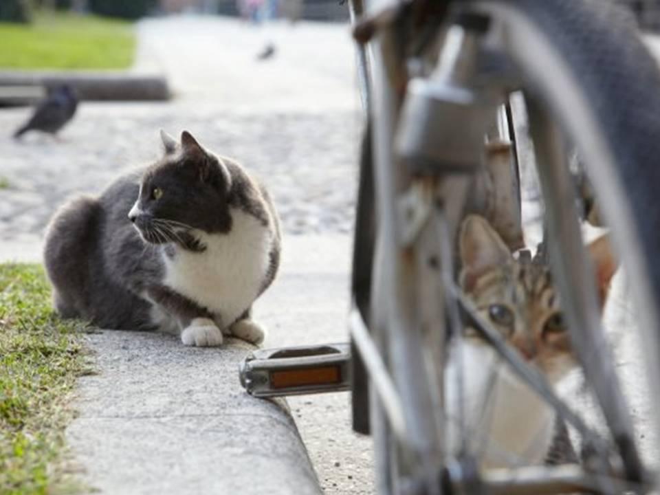 gatti a milano