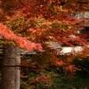 福岡竈門神社紅葉の時期2017!見ごろやオススメスポット情報