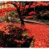 福岡県立四王寺県民の森紅葉の時期2017!見ごろやオススメスポット情報