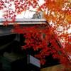 福岡秋月城跡紅葉の時期2017!見ごろやオススメスポット情報