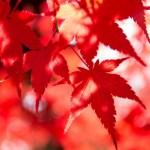 見立渓谷紅葉の時期2017!見ごろやオススメスポット情報