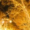 警固公園 TENJIN HIKARI SQUARE2017!期間とみどころは?