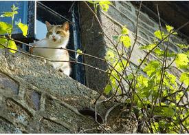 Lucy on the windowsill