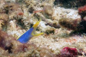 Manta Manta Diving - Bali - Scuba Diving - Ribbon Eel